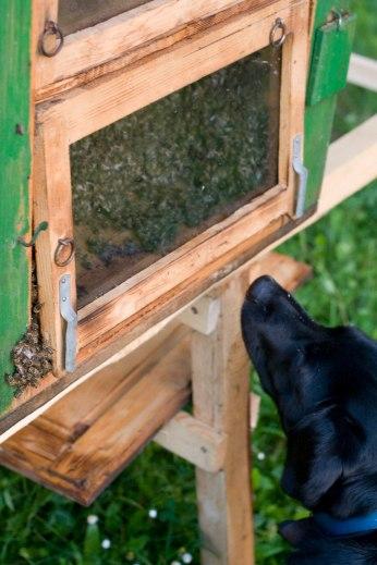 Včelár Piskot pozerá na svoje včely