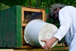 René Kliment vylieva včely do úla